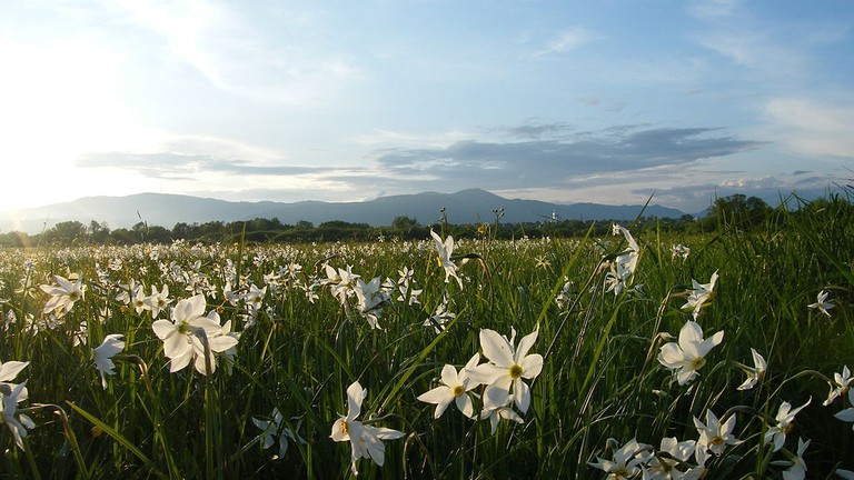 Valley of daffodils   © Palaida Sergiy/WikiCommons
