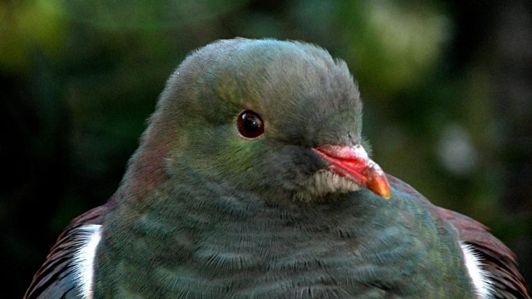 Weird New Zealand Animals 3