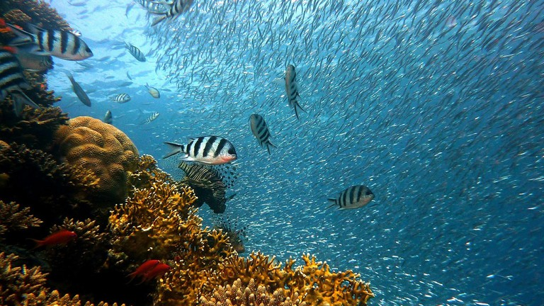 The Best Watersports to Try in Fernando de Noronha, Brazil