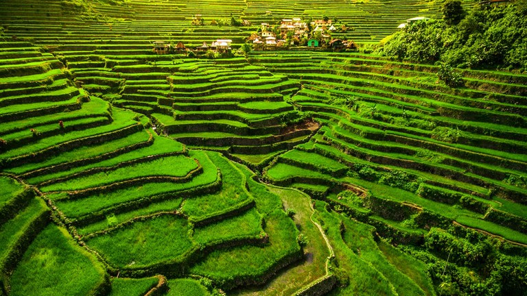 Image result for Banaue Rice Terraces