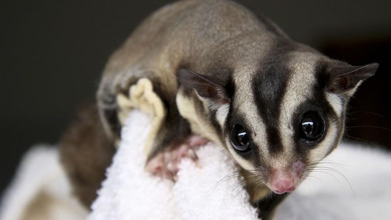 The 10 Cutest Animals In Australia