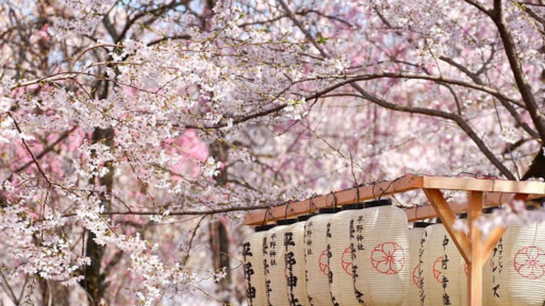 Cherry Blossom Forecast 2018 When And Where To See The Magic,Wall Stickers For Bedroom Amazon