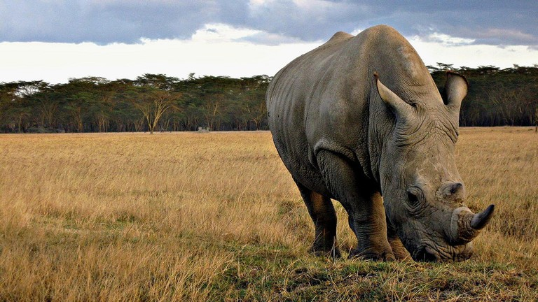 African Animals That Are Close To Extinction