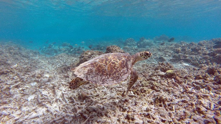 Exploitation of the marine ecosystem around the Gili Islands has led to heavy degradation of its coral reef system