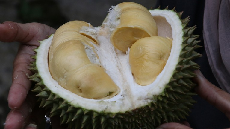 Meaty durian is a divisive fruit in Thailand thanks to its powerful odour.