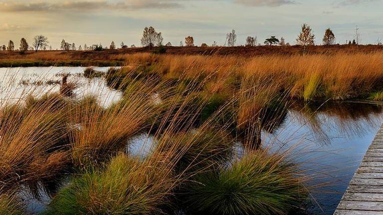 High Fens national park