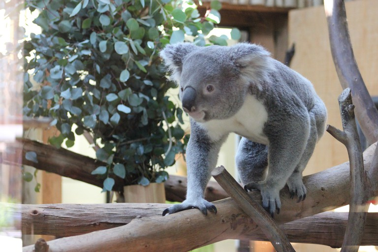 Dallas Zoo | © _somaholiday/Flickr