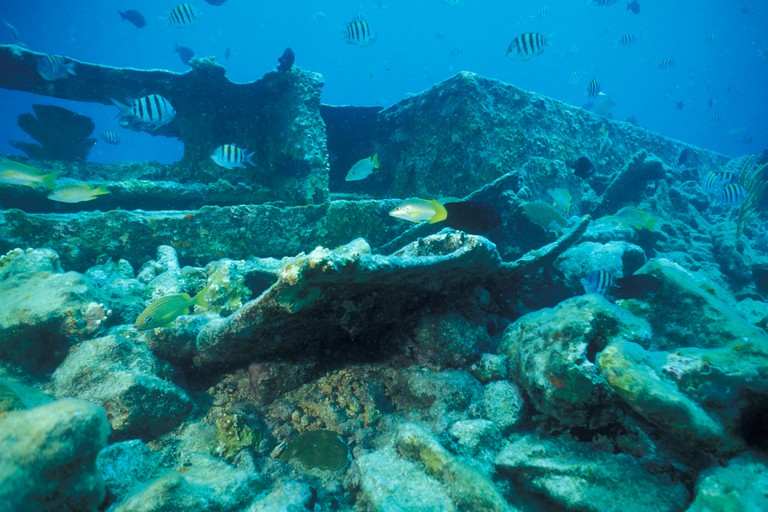 Sunken ships provide shelter for marine life and act as catalysts for the formation of new reefs