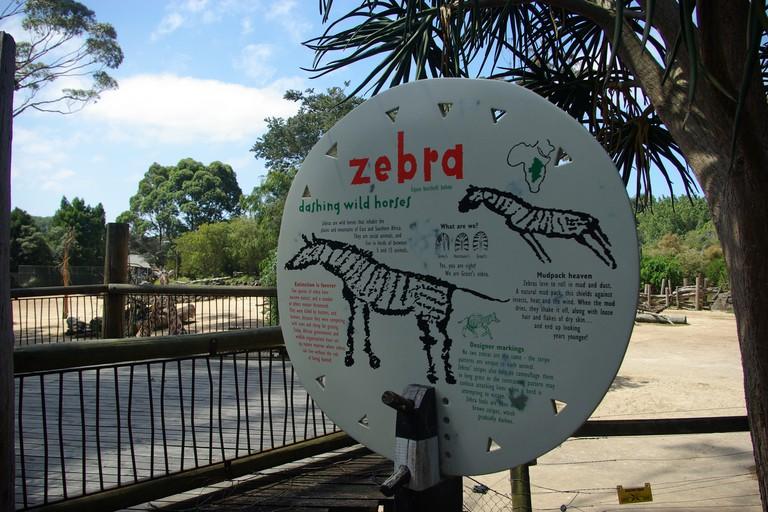 Auckland Zoo, Auckland