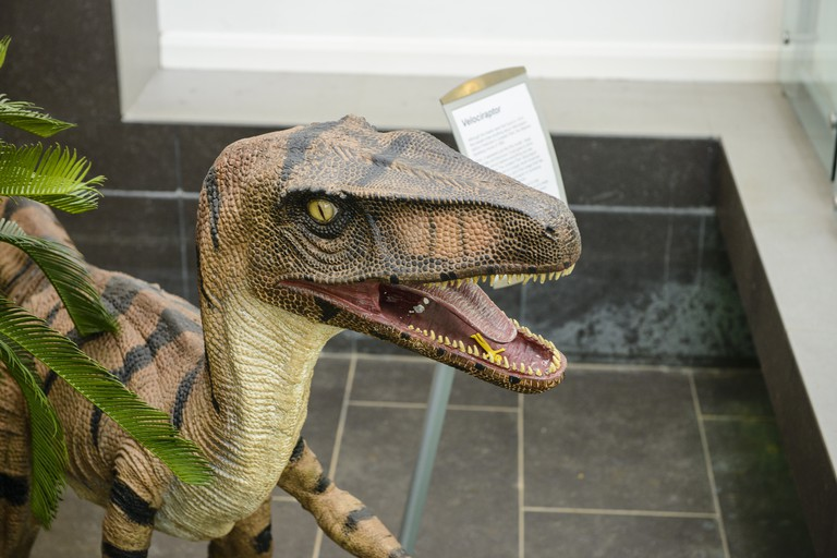 Exhibits at Ulster Museum