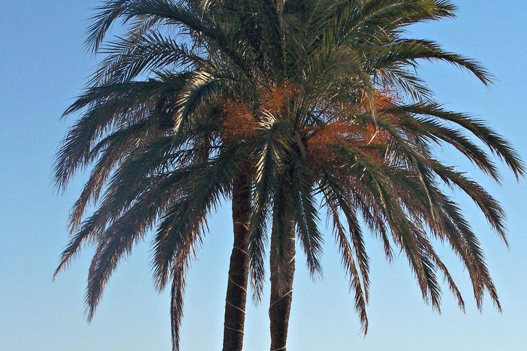 © Courtesy of La Rada Beach in Estepona