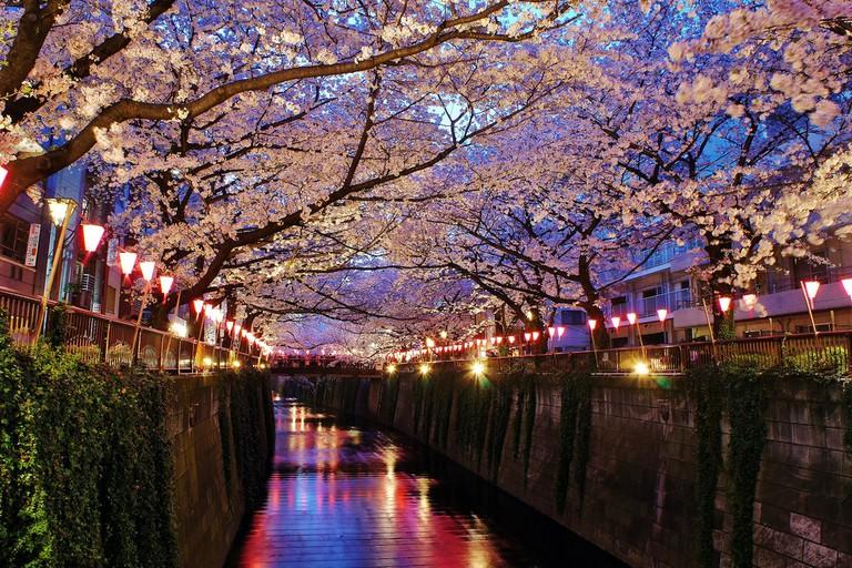 Meguro River in Naka-Meguro, Tokyo | © Manish Prabhune/Flickr