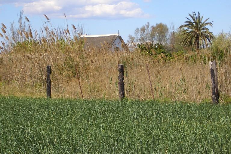 Rice fields in La Albufera