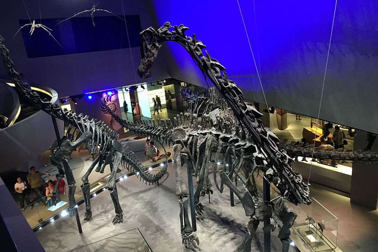 Singapore Lee Kong Chian Natural History Museum Dinosaur Skeletons