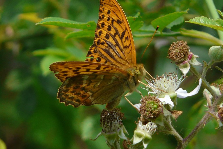 Discover fields of butterflies in Bookham Common