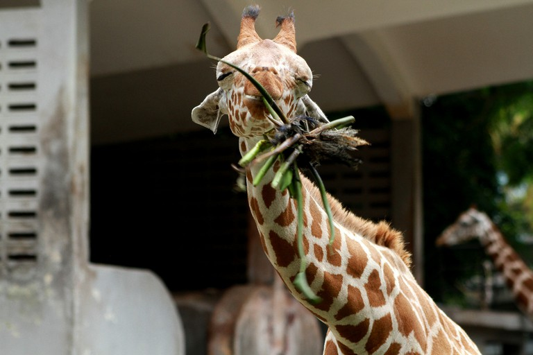 National Zoo of Malaysia, Ampang