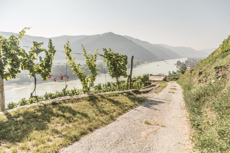 Weingut Nikolaihof Wachau, Mautern an der Donau