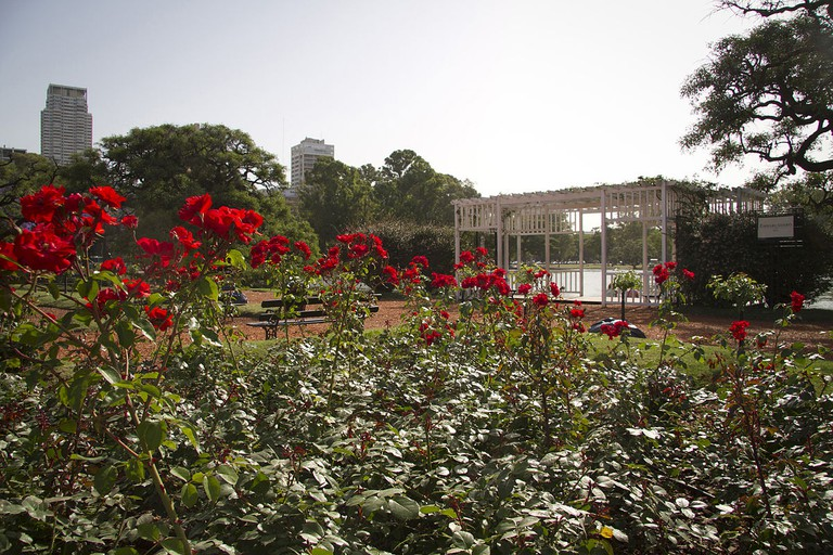 The Rose Garden in Palermo Park, Buenos Aires