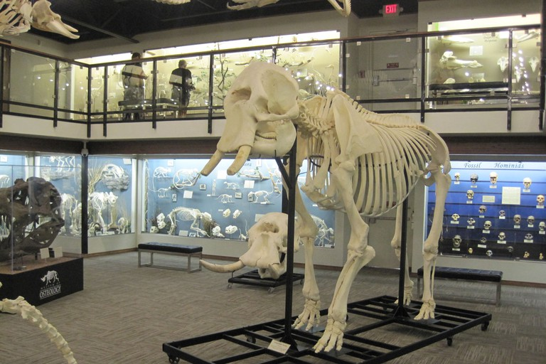 Skeleton Museum of Osteology™