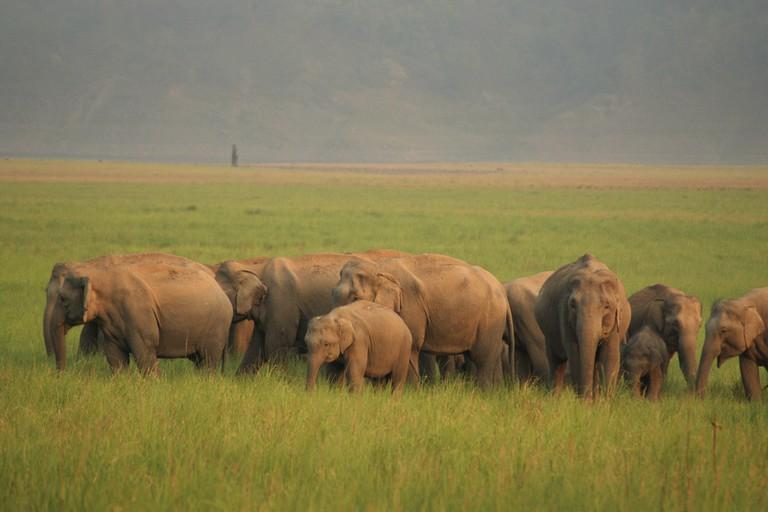 Elephant Herd at Jim Corbett