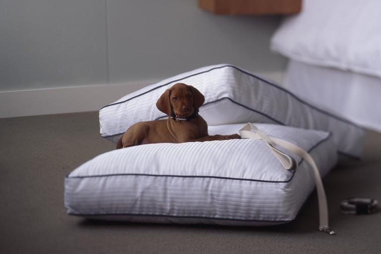 Enjoying the Heavenly Dog Bed®