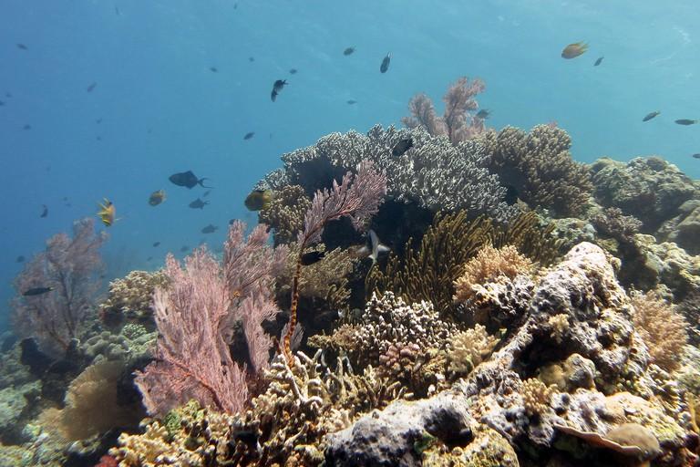 Coral Garden of Menjangan, Bali