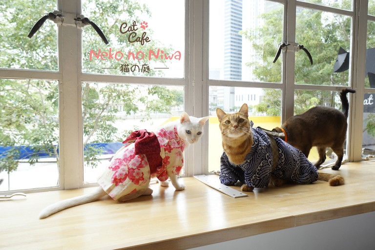 Cat Cafe Neko no Niwa, Singapore