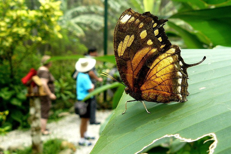 A butterfly at Gamboa Rainforest Resort, Panama