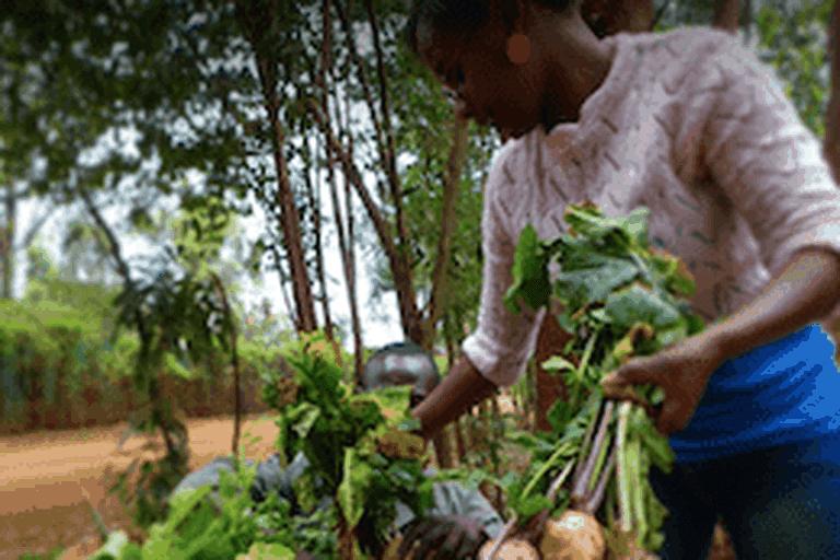 Mlango farm in Nairobi