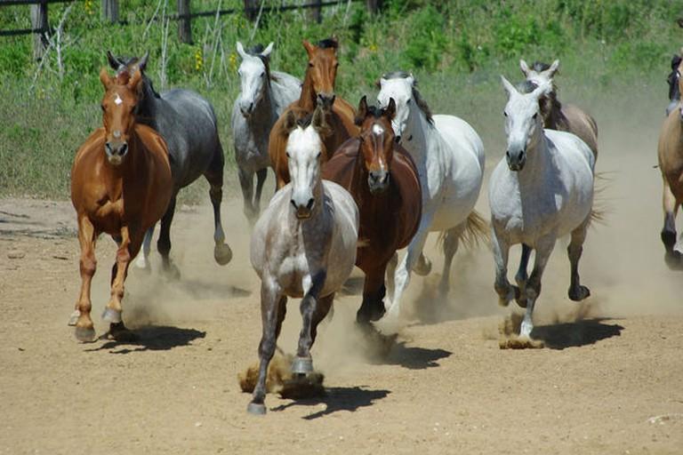 Ride beautiful Andalusian horses