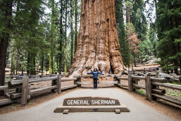 The General Sherman tree - Sequoia National Park