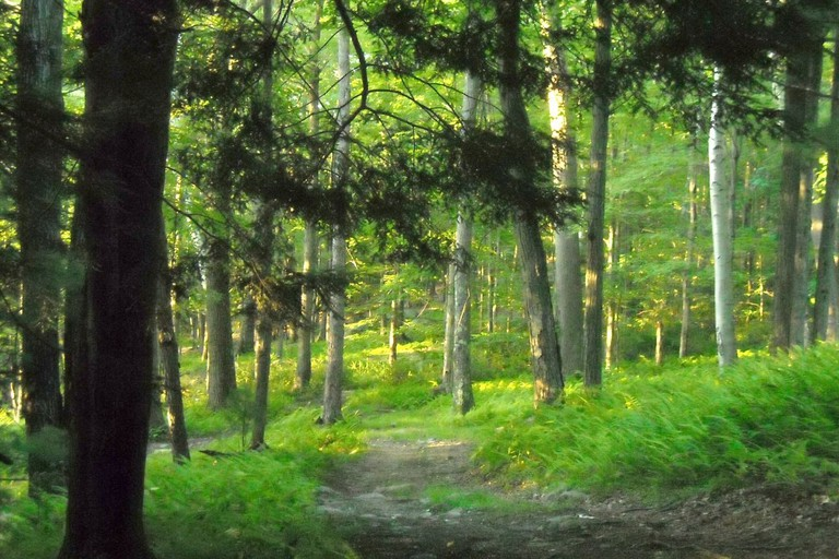 Hiking the woodland trail at sunset