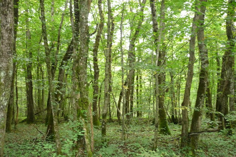A peaceful forest section of the ViaRhôna