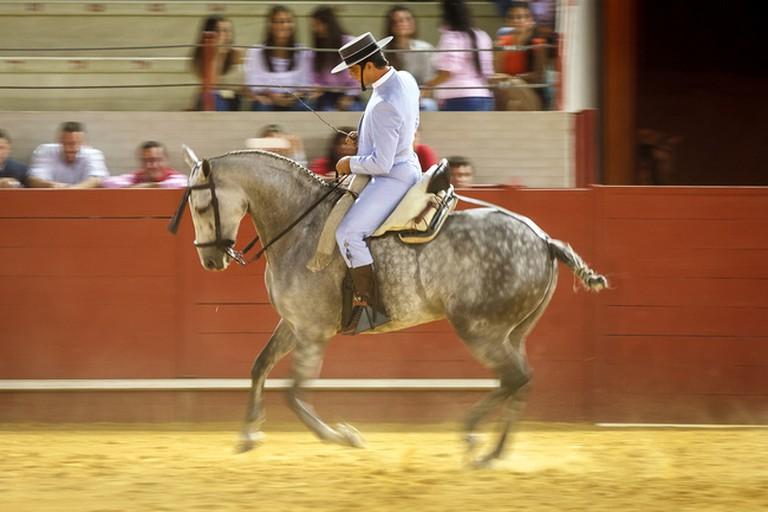 Learn the art of Doma Vaquera at Las Mesas