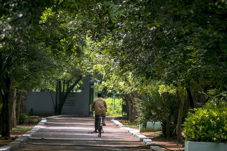 An idyllic walkway inside the Guindy National Park