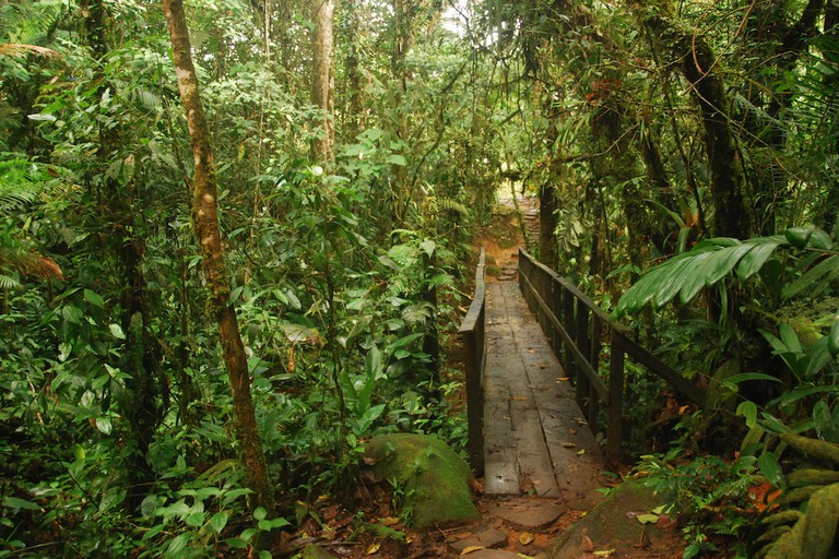 Set into the jungle