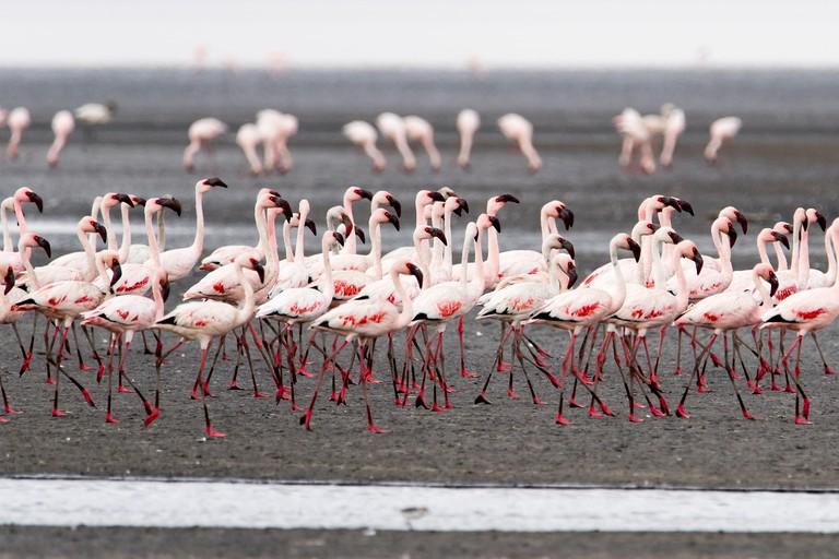 Flamingos on Lake Natron