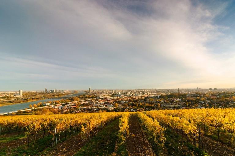 Blick vom Nußberg über Weinberge auf die Stadt