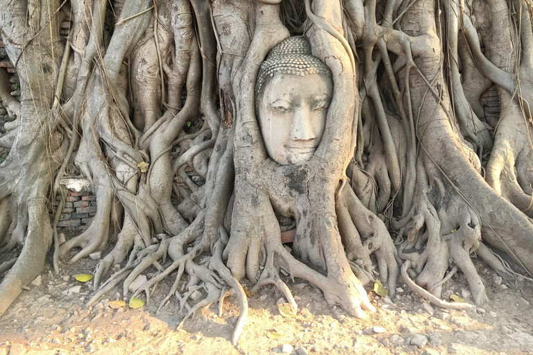 Wat Mahathat's famous Buddha head in a fig tree
