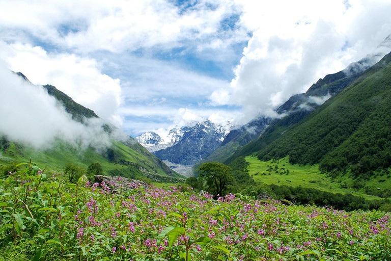 Valley of Flowers 1