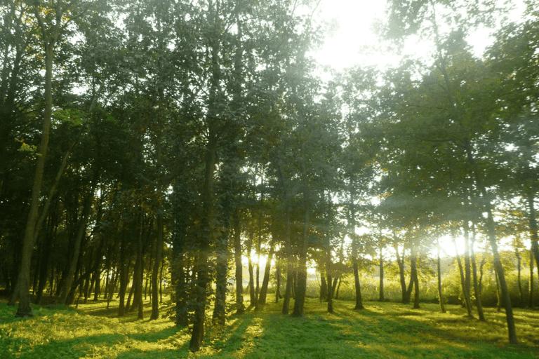 Malbork Park