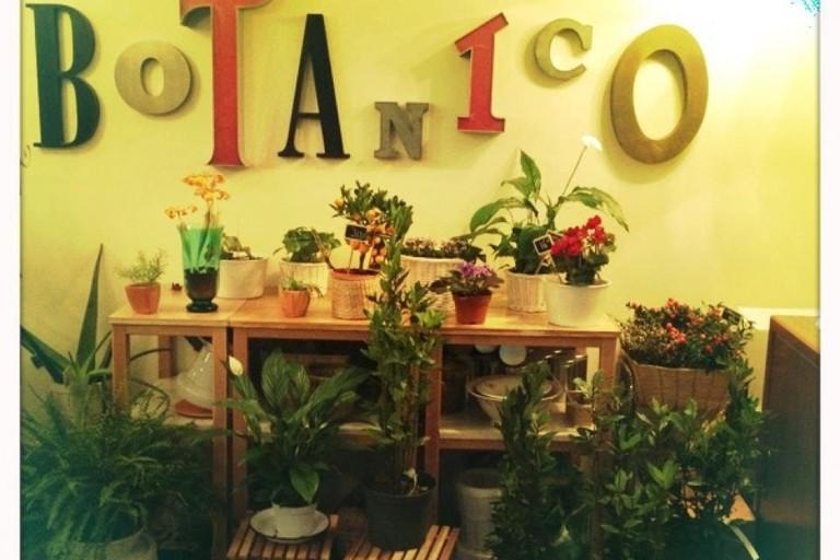 Cafe Botanico, Zaragoza