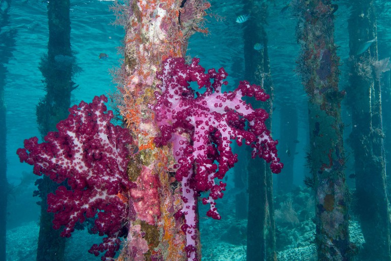 Soft Coral on Pilings