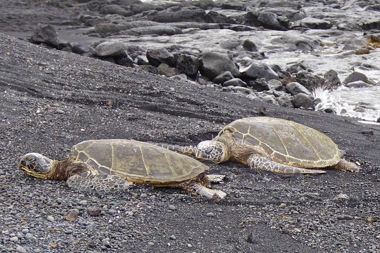 Honu at Punalu'u Beach | © Les Williams/Flickr