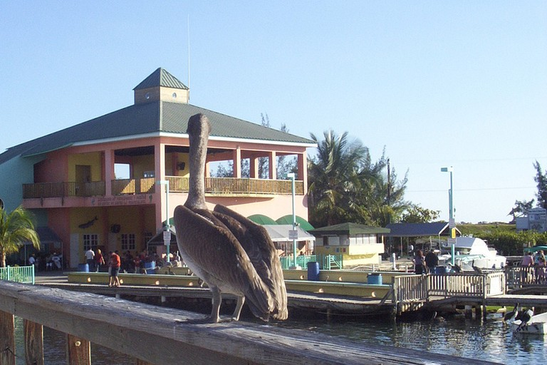 Have fun feeding the pelicans at La Guancha, Ponce