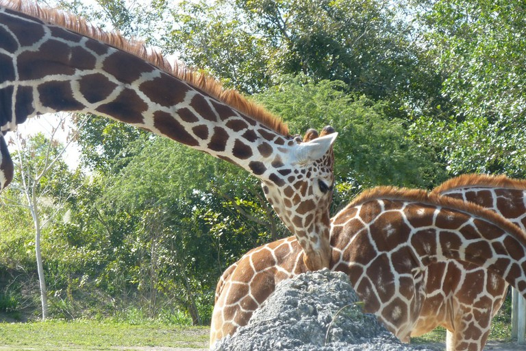 Check out the wild animals at Zoo Miami