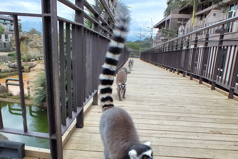 Lemurs at leofoo