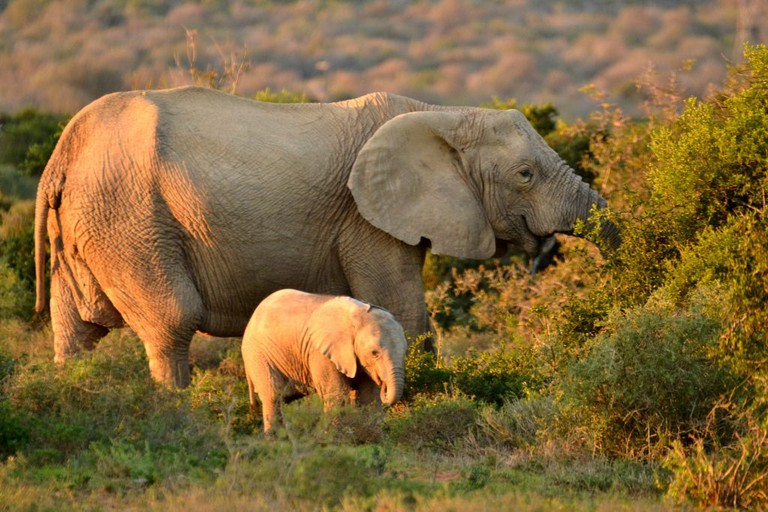 Addo Elephant Park offers some of the most spectacular elephant viewing in the world