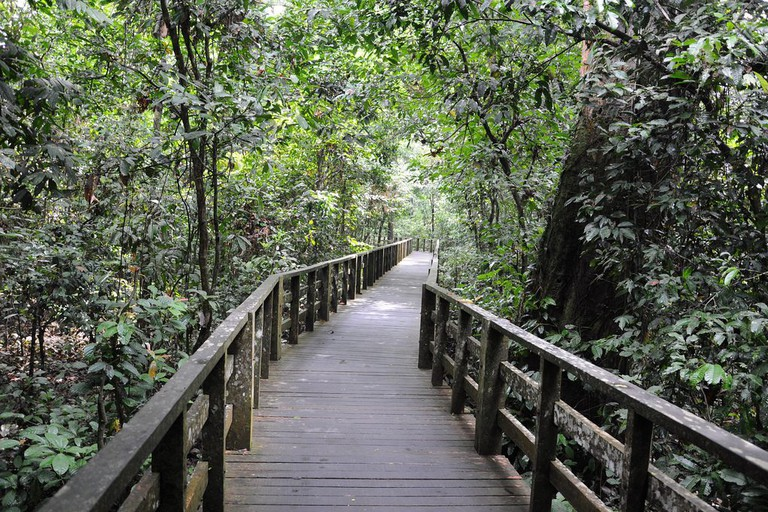 Boardwalk to the orang utan area