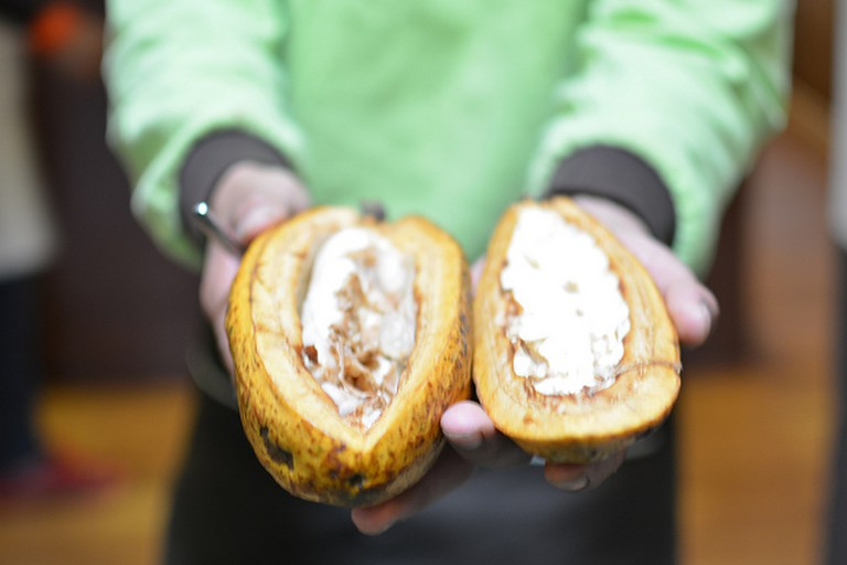 Cacao Fruit and Seeds